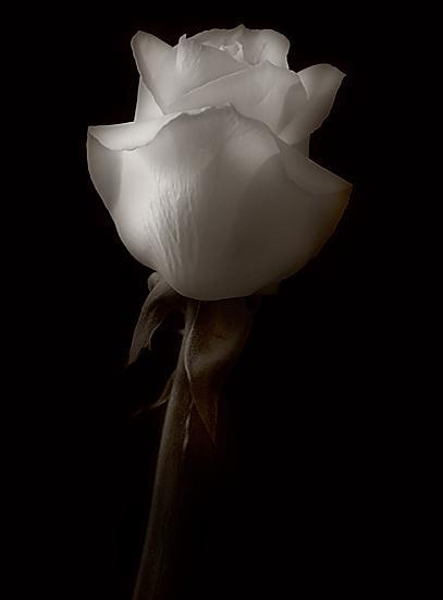 عشق،عکس عاشقانه،عاشق،دل،خداحافظ،عزیزم،دوستت دارم،خاطره،خاطرات